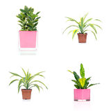 houseplants Arkivbilder