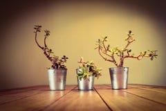 houseplants Lizenzfreies Stockbild
