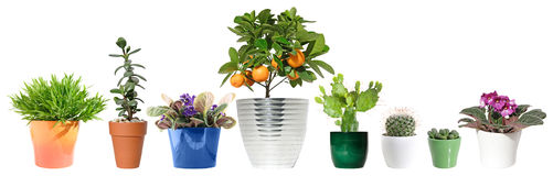 houseplants Arkivfoton