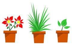 houseplants illustrazione di stock