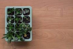 Houseplants auf dem Tisch Lizenzfreie Stockfotografie