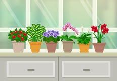 Houseplants Background Illustration Stock Photography