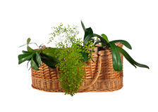 Houseplants in the basket Stock Images