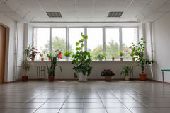 Houseplants blisko wielkiego okno Obraz Royalty Free
