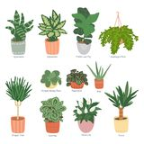 Houseplants collection isolated on white background. Home garden. Vector illustration in the of hand-drawn flat vector illustration