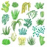 Houseplants de la acuarela en los potes fijados ilustración del vector