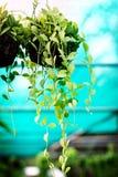 Houseplants in den Wassertropfen eines Grüns Lizenzfreie Stockbilder
