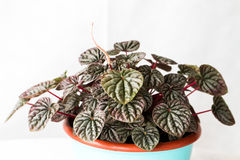 Houseplants details i. N home interior Royalty Free Stock Photo