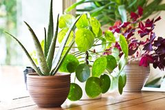 Houseplants display. Various house plants or indoor plants. Houseplants display beside the house window. Green lush indoor plants stock image