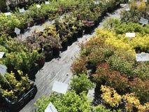 Houseplants en van tuininstallaties openluchtverkoper stock fotografie