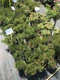 Houseplants en van tuininstallaties openluchtverkoper stock afbeeldingen
