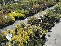 Houseplants en van tuininstallaties openluchtverkoper royalty-vrije stock afbeeldingen