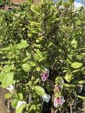 Houseplants en van tuininstallaties openluchtverkoper stock afbeelding