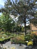 Houseplants en van tuininstallaties openluchtverkoper royalty-vrije stock foto