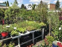 Houseplants en van tuininstallaties openluchtverkoper royalty-vrije stock foto's