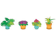 Houseplants Stock Photo