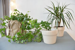 Houseplants royalty free stock image