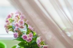 Houseplants for home and garden royalty free stock images