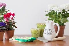 Houseplants i en kruka Arkivfoto