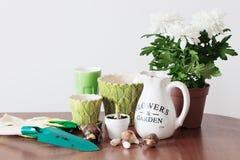 Houseplants i kruka på tabellen Royaltyfria Foton