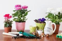 Houseplants i kruka på tabellen Royaltyfri Bild