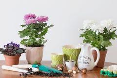 Houseplants i kruka på tabellen Royaltyfri Fotografi