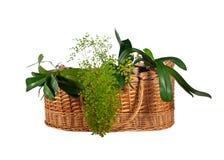 Houseplants im Korb Stockbilder