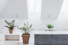 Houseplants in luxury washroom Royalty Free Stock Photography