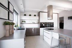 Houseplants na cozinha exclusiva foto de stock royalty free