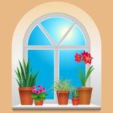 Houseplants na janela ilustração royalty free