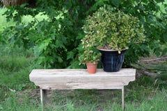 Houseplants na nieociosanej ławce Fotografia Stock