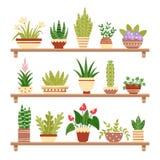 Houseplants na półce Kwitnie w garnku, doniczkowym houseplant i roślina garnkach, Dom rośliny na półka odosobnionym wektorze royalty ilustracja