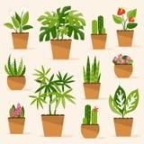 houseplants också vektor för coreldrawillustration Royaltyfri Fotografi