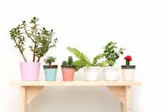 Houseplants op een houten bank op wit Stock Fotografie