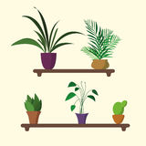Houseplants op plank in vlak ontwerp Stock Afbeelding