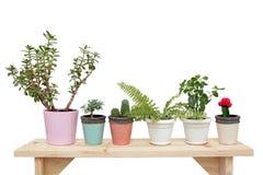 Houseplants på en träbänk royaltyfri foto