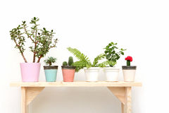 Houseplants på en träbänk på vit Arkivbild