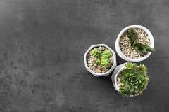 Houseplants på grå bakgrund Royaltyfria Foton