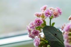 Houseplants para el hogar y el jardín fotos de archivo libres de regalías