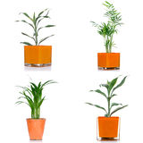 Houseplants Royalty Free Stock Images