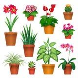 Houseplants Stock Photo