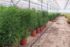 Houseplants som är fullvuxna i ett växthus i Nederländerna Royaltyfria Foton