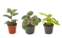 Houseplants verdes sortidos em uns potenciômetros Imagem de Stock Royalty Free