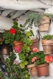 Houseplants w garnkach Zdjęcia Royalty Free