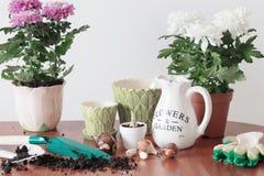 Houseplants w garnku Zdjęcie Stock