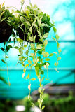 Houseplants in waterdalingen in een groen Royalty-vrije Stock Afbeeldingen