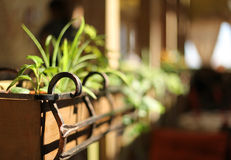 Houseplants in a wooden flower bed. shallow depth of field Stock Photo