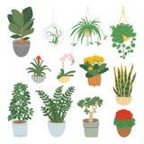 Houseplantsinzameling op witte achtergrond wordt ge?soleerd die De tuin van het huis Vectorillustratie in van hand-drawn vlakte vector illustratie