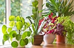 Houseplantsskärm Husväxter eller inomhus växter royaltyfria bilder