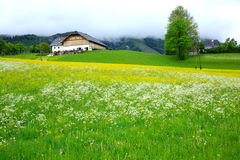 Houses. Creeping up the hillside,surrounded by wild flowers,Austria,Europe Stock Photo